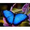 Продажа Живых тропических бабочек на 14 Февраля более 30 Видов