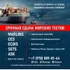 Помогаем в сдаче морского теста CES,  Marlins,  ECDIS,  ASK